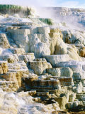 Canary Spring at Mammoth Hot Springs  Yellowstone National Park  Wyoming
