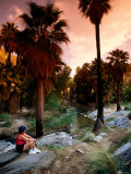 Agua Caliente Indian Reserve Palm Canyon  Upper Canyon  Palm Springs  California