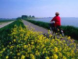 Woman Cycling Atop Polder Dike  Netherlands