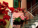 Flowers and Painted Houses in Town in Cinque Terre  Manarola  Liguria  Italy