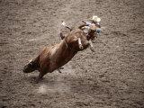 Man Bullriding at Cheyenne Frontier Days Rodeo  Cheyenne  Wyoming