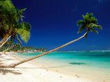 Palm Trees Leaning Towards Sea at Matautu Beach  Matautu  A'Ana  Upolu  Samoa