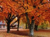 Beech Trees in Autumn at Medevi Brunn  Motala  Ostergotland  Sweden