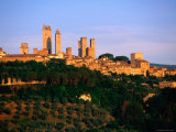 Trees and Buildings of Town at Sunrise  San Gimignano  Tuscany  Italy