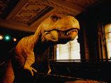 Tyrannosauraus Rex at Natural History Museum  London  Greater London  England
