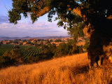 Firestone Vineyard in Background  Santa Ynez Valley  California