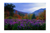 Fall Meadow at Twilight
