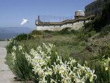 Egret Flies over the lawns of Alcatraz  San Francisco  California