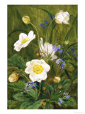 Anemones and Forget-Me-Nots