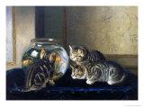 Three Kittens Watching Goldfish