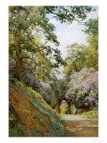 Flowery Glade