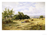 Hampshire Cornfield