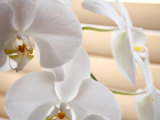 White Orchids III