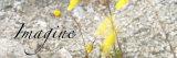 Imagine: Yellow Daisy