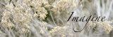 Imagine: Flowering Meadow