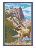 Big Horn Sheep  Rocky Mountain National Park