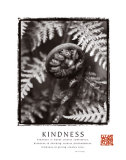Kindness: Fiddlehead