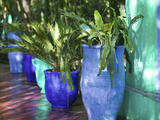 Jardin Majorelle and Museum of Islamic Art  Villa Pottery  Marrakech  Morocco