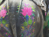 Elephant Decorated with Colorful Painting at Elephant Festival  Jaipur  Rajasthan  India
