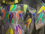 Elephant Decorated with Colorful Painting  Jaipur  Rajasthan  India
