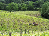 Vineyard Tractor in Vines at Chateau Soucherie of Pierre-Yves Tijou  Maine Et Loire  France
