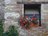 Flowers in a Window In a Tuscan Village  San Quirico d'Orcia  Italy