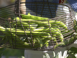 Green Beans in Vegetable Garden  Clos Des Iles  Le Brusc  Var  Cote d'Azur  France