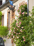 House with Rose Bushes and Wrought Iron Sign  Hautvillers  Vallee De La Marne  Champagne  France