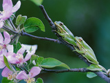Two Frogs on Branch