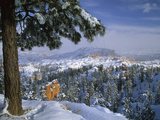 Bryce Canyon in Winter  Utah  USA