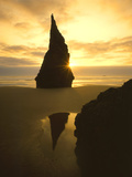 Sunset Silhouettes Seabird Atop Rock Pinnacle  Bandon Beach  Oregon  USA