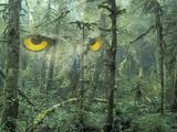 Montage  Owl  Forest  Oregon  USA