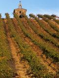 Red Willow Vineyard with Stone Chapel  Yakima County  Washington  USA