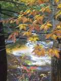 Stream and Fall Foliage  New Hampshire  USA
