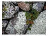 Stones and Vines