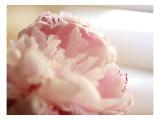 Sweet Flower II
