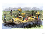 African-American Slaves Unloading Rice Barges in South Carolina 1800
