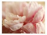 Sweet Flower I