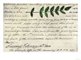 William Clark's Sketch of an Evergreen Shrub Leaf in the Lewis and Clark Expedition Diary  c1806
