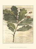 Weathered Oak Leaves II