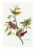 Painted Bunting Reproduction d'art par John James Audubon