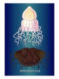 Jellyfish: Peromedusae