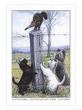 Scottish Terrier  West Highland Terrier  Skye Terrier