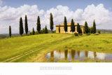 Tuscan Hillside no 5