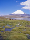 Chile  Andes  Lauca National Park  Lake Chungara and Volcan Parinacota  6300M
