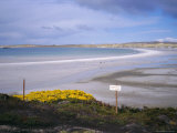 Mined Beach from the Falkland War  Near Stanley  Falkland Islands  South America