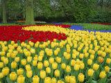 Tulips  Keukenhof Gardens  Netherlands
