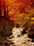 Fall Foliage and Running Stream  Grindsbrook Edale  Peak District  Derbyshire  England  UK