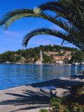Promenade and Harbour  Cavtat  Croatia  Europe