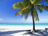 Palm Tree  White Sandy Beach and Indian Ocean  Jambiani  Island of Zanzibar  Tanzania  East Africa